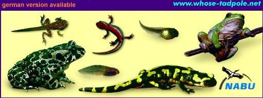 Amphibians of Central Europe